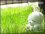 韓國卡通mashimaro流氓兔子形象桌布15 - ml0014.jpg