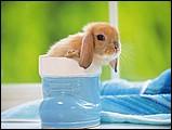 寵物寶貝(三)--可愛兔子1 - 0da033068s.jpg