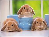 寵物寶貝(三)--可愛兔子2 - 0da033069s.jpg