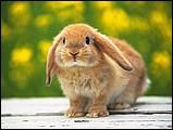 寵物寶貝(三)--可愛兔子3 - 133050s.jpg