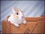 寵物寶貝(三)--可愛兔子5 - 1da033004s.jpg