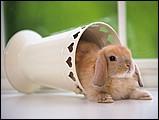 寵物寶貝(三)--可愛兔子6 - 1da033023s.jpg