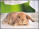 寵物寶貝(三)--可愛兔子7 - 1da033024s.jpg