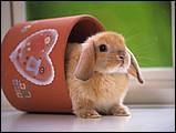 寵物寶貝(三)--可愛兔子8 - 1da033025s.jpg
