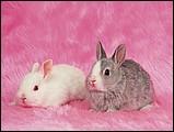 寵物寶貝(三)--可愛兔子9 - 1da033039s.jpg