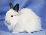 寵物寶貝(三)--可愛兔子10 - 1da033044s.jpg