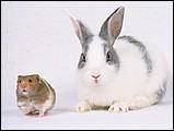 寵物寶貝(三)--可愛兔子11 - 1da033045s.jpg