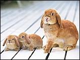 寵物寶貝(三)--可愛兔子12 - 1da033048s.jpg