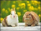 寵物寶貝(三)--可愛兔子13 - 1da033051s.jpg