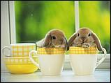 寵物寶貝(三)--可愛兔子14 - 1da033054s.jpg