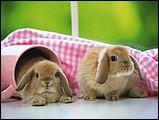 寵物寶貝(三)--可愛兔子15 - 1da033055s.jpg