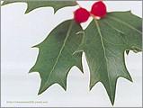 聖誕主題桌布10 - ml0010.jpg