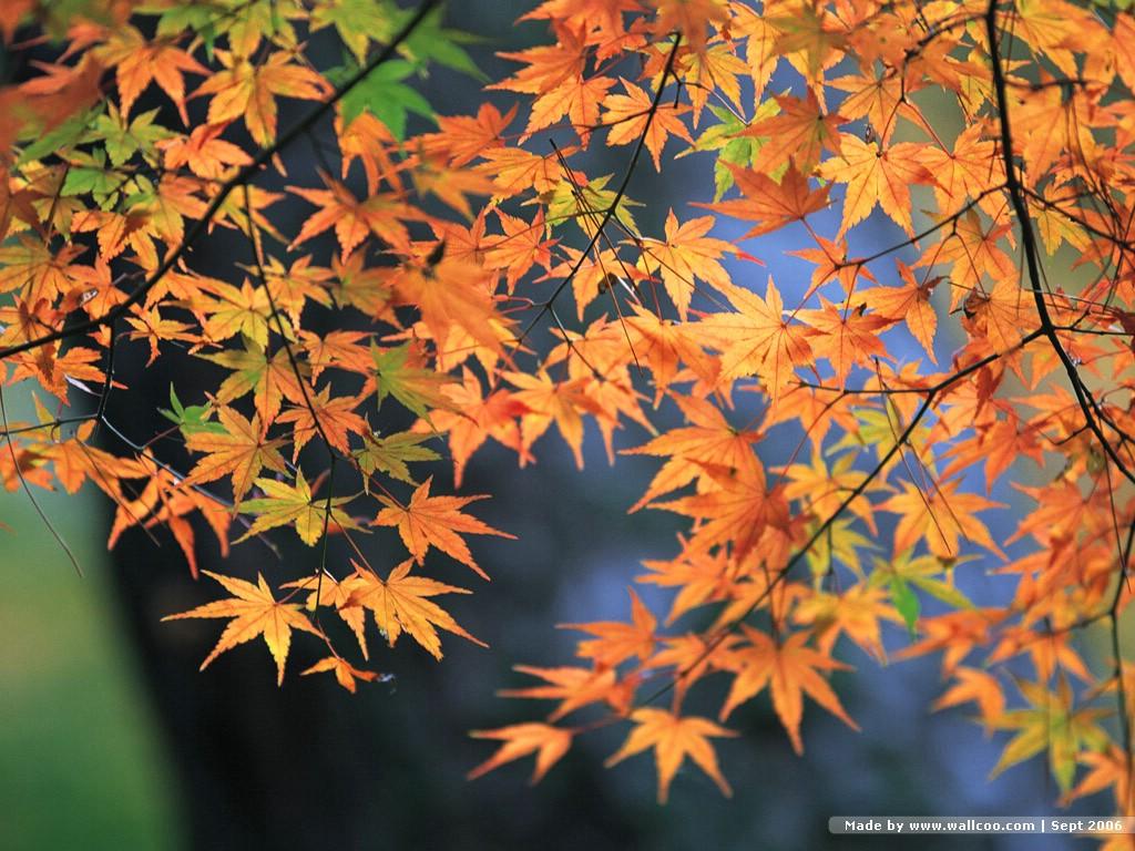 秋日风景图(二) - 雁月菊蚕(雁月秋菊) - 流泪的风......